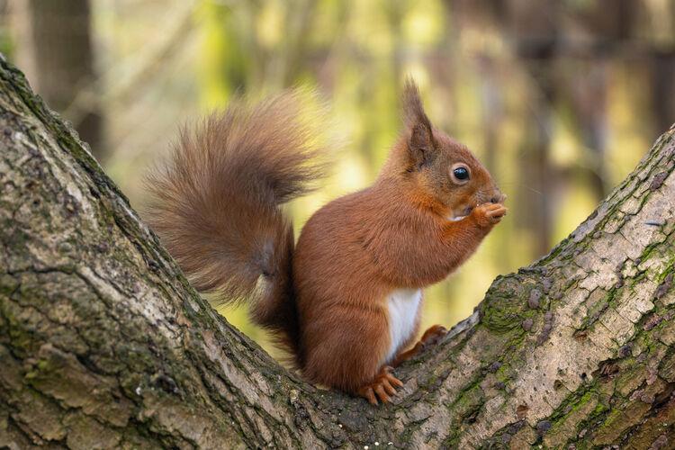 9a Happy Squirrel M2