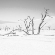 freddawson Desert light M2