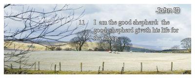 I am the good shepherd:
