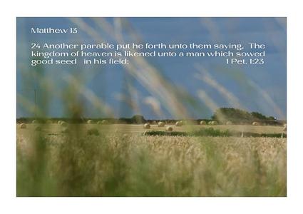 Matthew 13 v 24