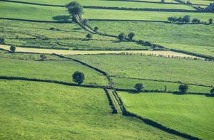 Fields of Green 2