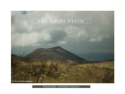 The Alpine Heath 3