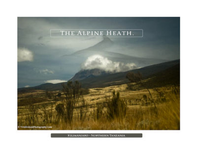 The Alpine Heath