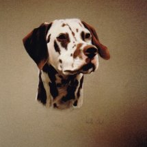Brown Dalmation