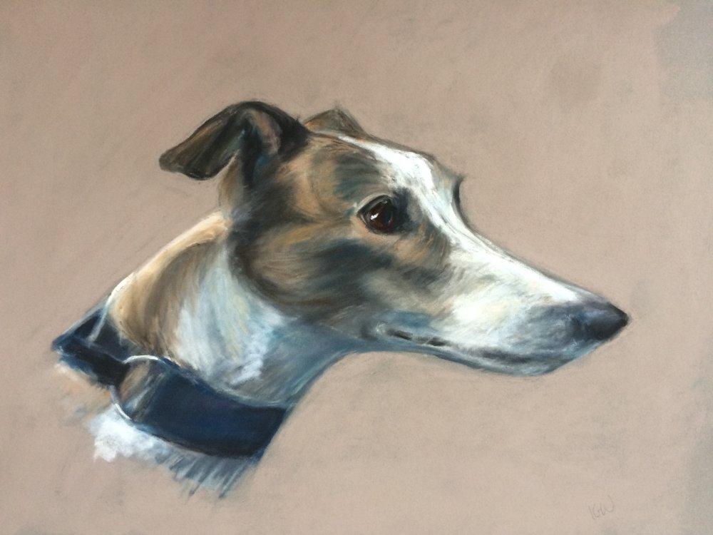 Charlie the Greyhound