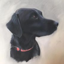Tattie - black labrador