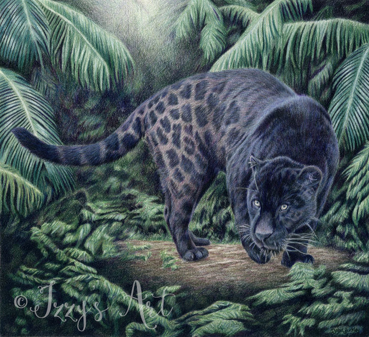 Black Jaguar the rainforest by Isobel Buckley giclee limited edition print
