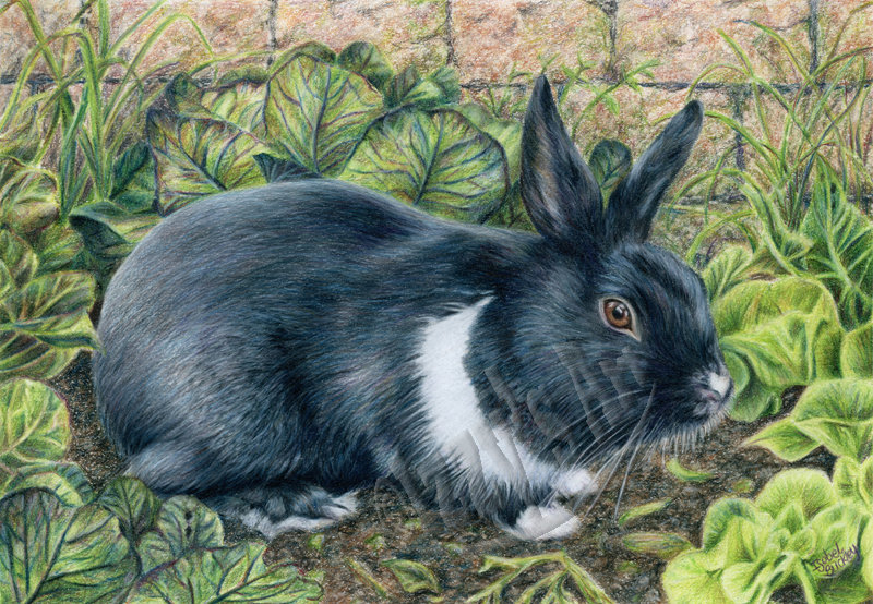 'Peter the Rabbit' Key RIng