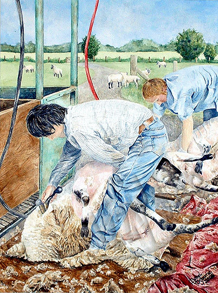 'Sheep Shearing'