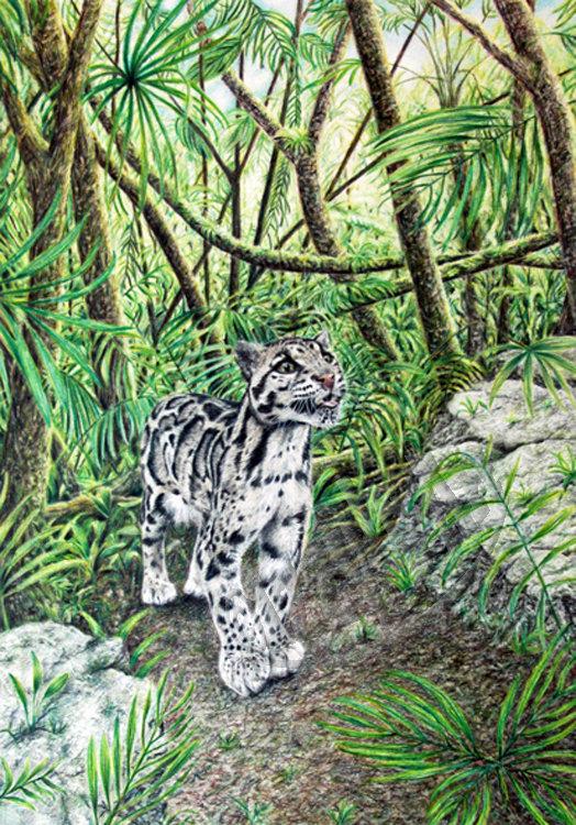 'Clouded Leopard'  Magnet