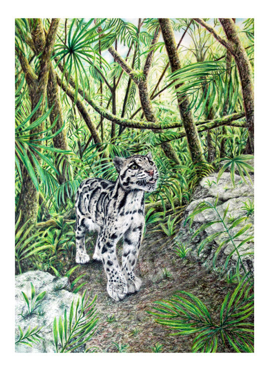 'Clouded Leopard' Card