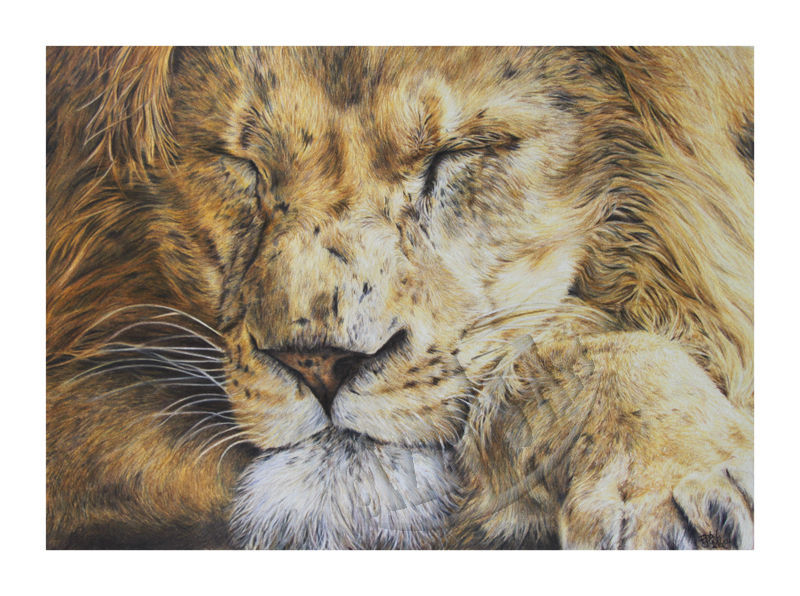 'Sleeping Lion' Print