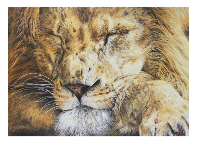 'Sleeping Lion' Card