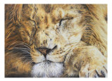 'Sleeping Lion' Card