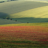 3842-Poppy Field