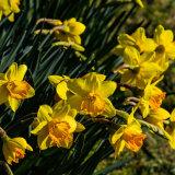 5212-Spring