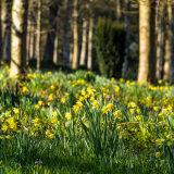 5215-Spring