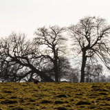 5235-Sunday in Petworth Park