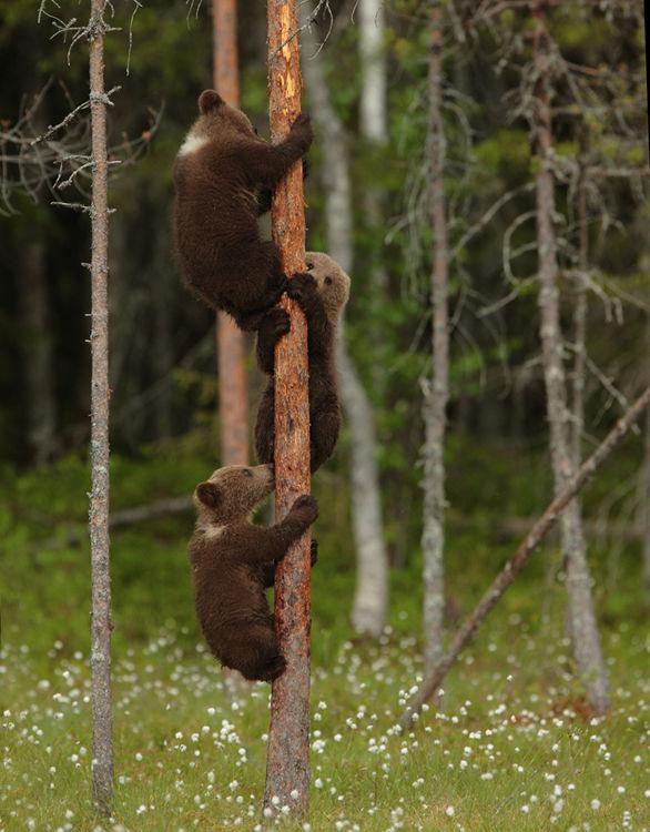 Climbing Cubs (Finland)