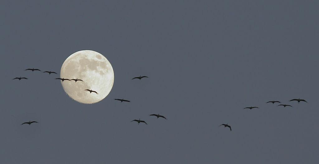 Cranes on Moon Flight.