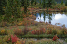 Autumn Colours (Emerald Lakes, Banff)