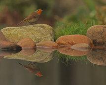 Self Made Reflection Pool