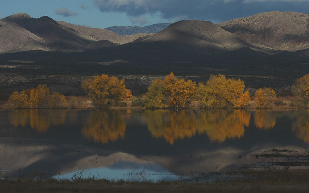 Bosque Del Apache Reserve (part of)