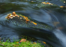 Autumn Flow.