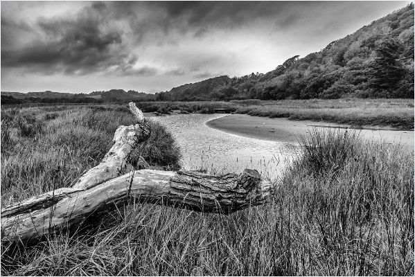 Saltmarsh, the Gower