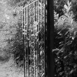 Lukesland Gardens by Joanne Mottershead