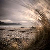 Sea grass wave