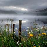 Blodau Gwyllt/Wild flowers