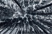 Coedwig Mymbyr Forest
