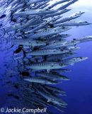 Barracuda Stack, Sudan