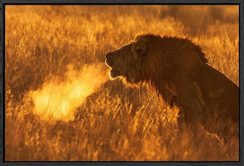Black float canvas Lion breath
