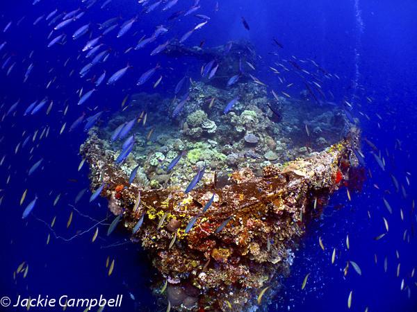 Bow of Fujikawa Maru, Truk Lagoon, Micronesia