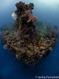 Fujikawa Maru Stern, Truk Lagoon, Micronesia