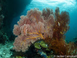 Reef Scene, Raja Ampat, Indonesia