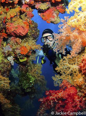 Natural Coral Frame, Truk Lagoon, Micronesia