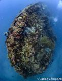 SS Yongala, Queensland, Australia