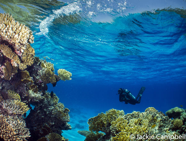 Reefscape, Red Sea, Egypt