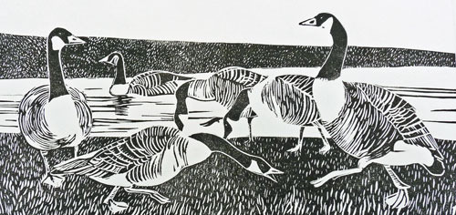 Buxton Geese