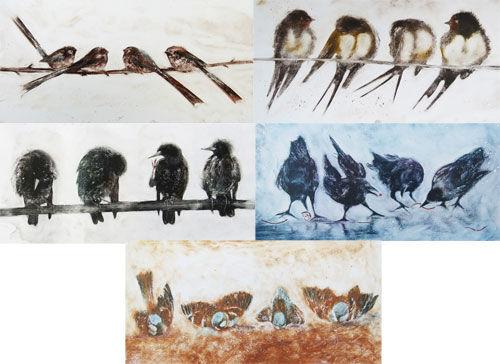 Multi Pack DL Birds
