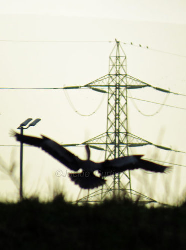 Heron and Pylon
