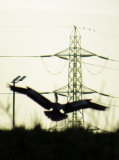 Heron and Pylon