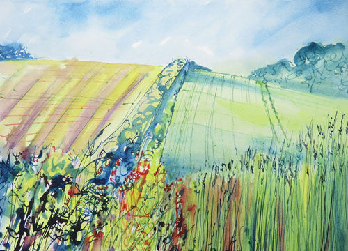 Summer Fields and Hedgerow