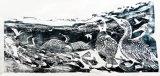 Cormorants and Fish