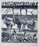 Cranes and Lapwings