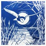 Night Flight Barn Owl