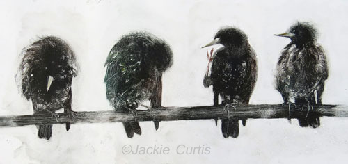 A Natter of Starlings